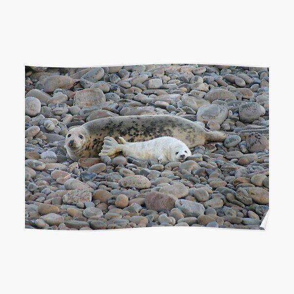 Grey seal & pup Poster