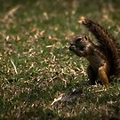 Nuts about Nuts by David  Preston