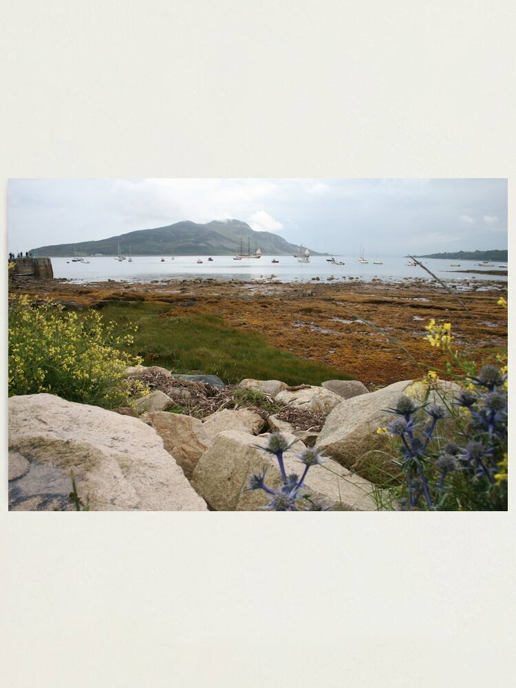 Alternate view of Busy bay Photographic Print
