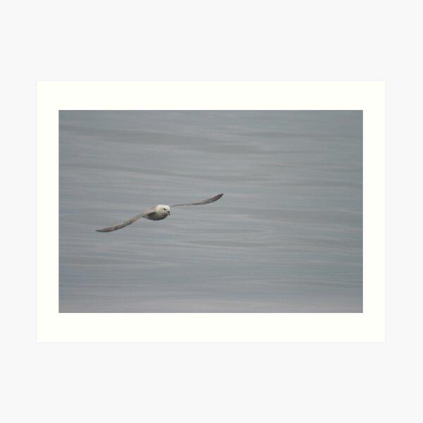 Gliding Art Print