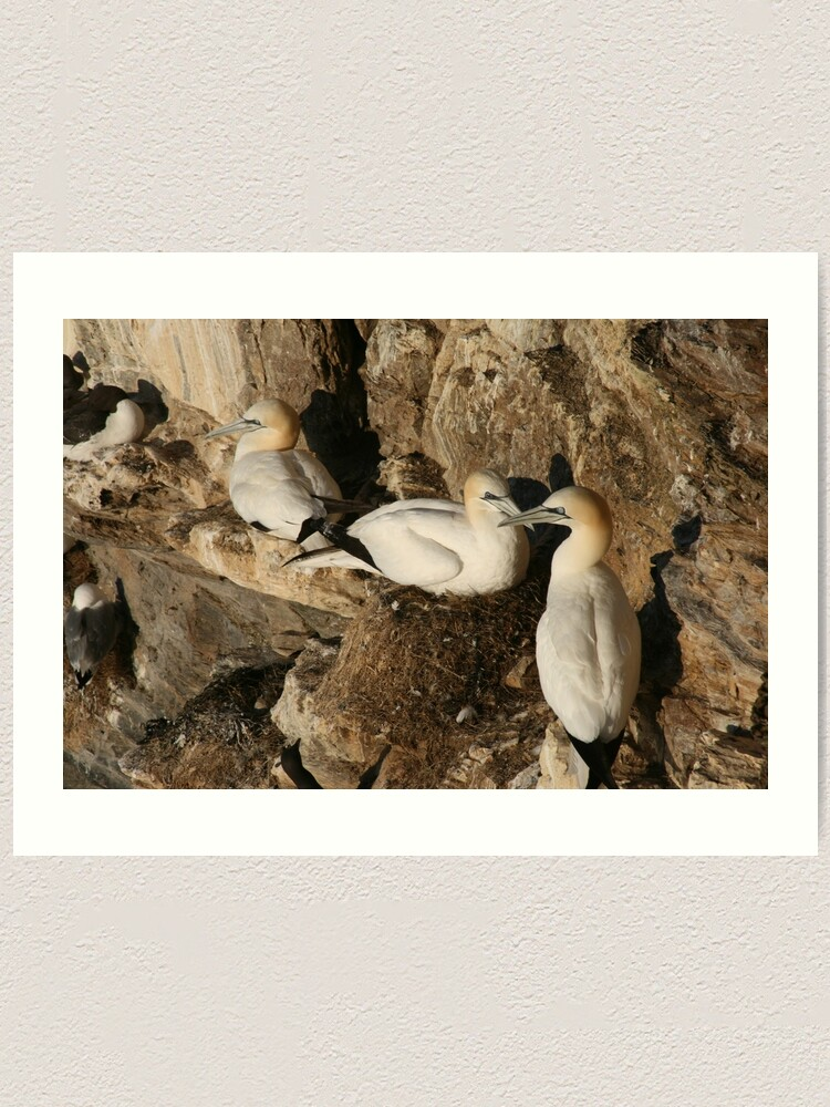 Alternate view of Nesting Art Print