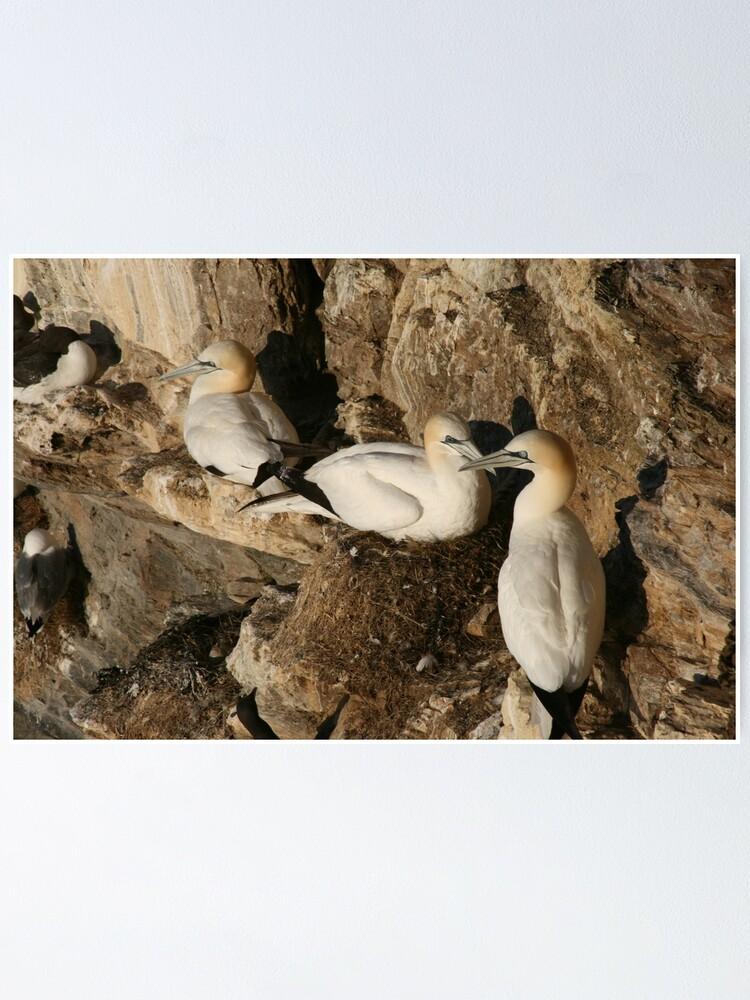 Alternate view of Nesting Poster
