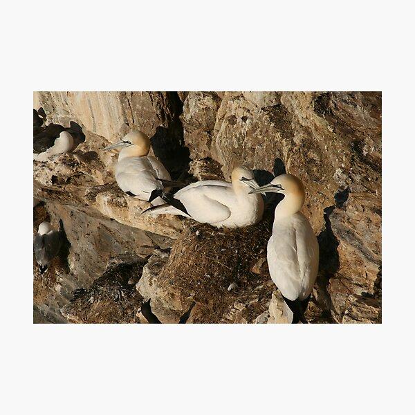 Nesting Photographic Print