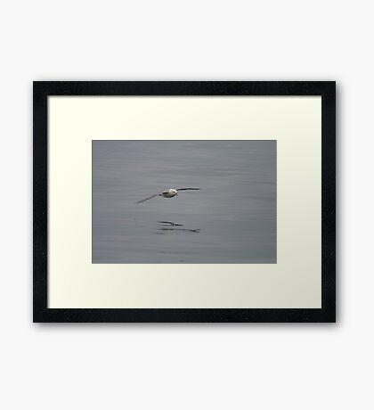 Skimming Framed Print