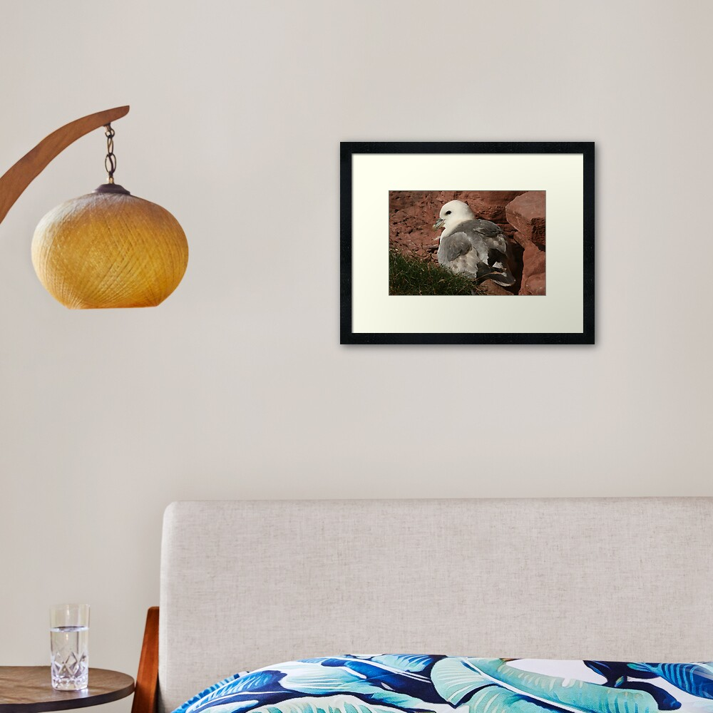 Fulmar Framed Art Print