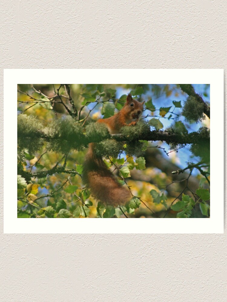 Alternate view of Red Squirrel Art Print