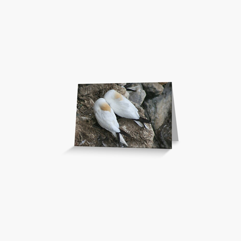 A nesting pair Greeting Card
