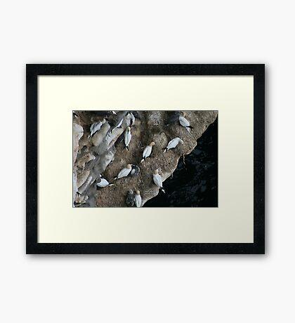 Nests Framed Print