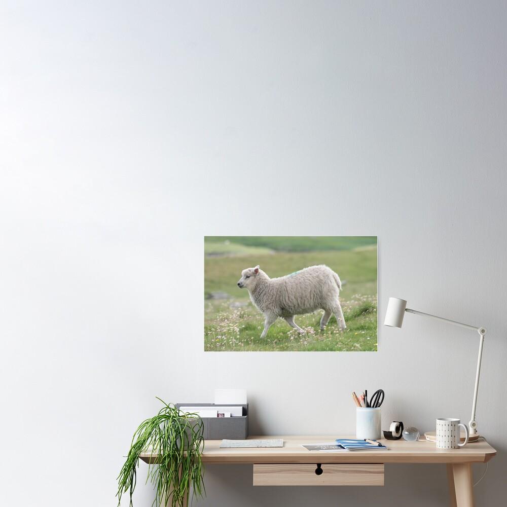 Shetland lamb Poster