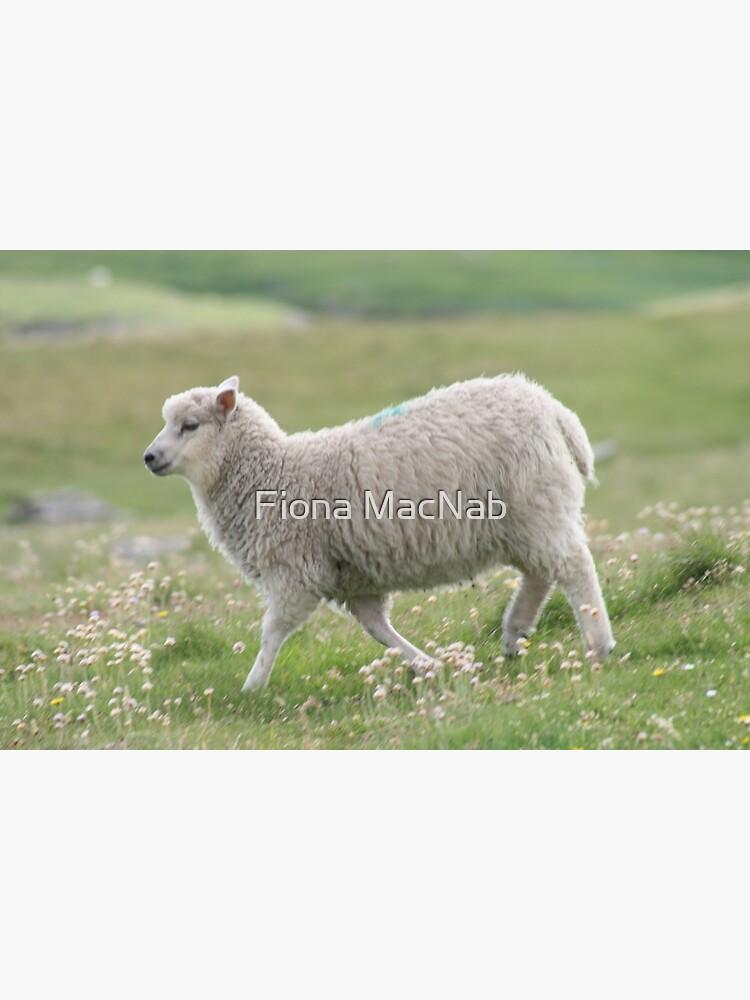 Shetland lamb by orcadia