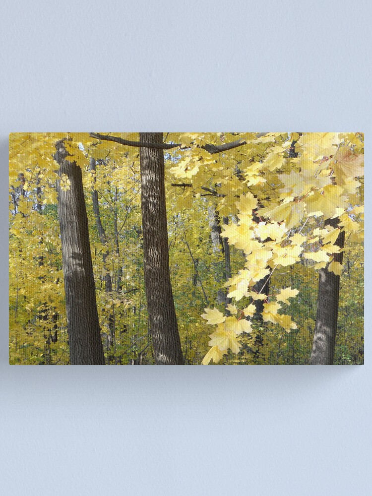 Alternate view of Maple Gold Canvas Print