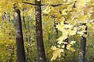 Maple Gold by MarjorieB