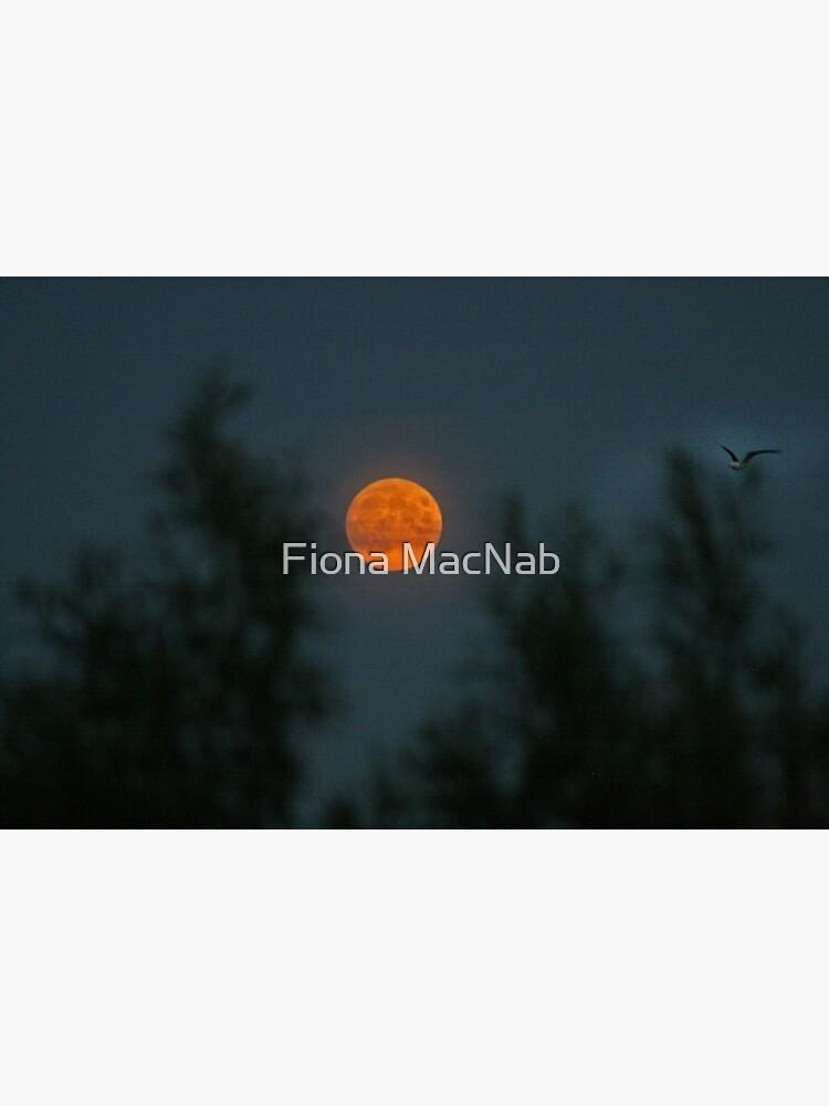 Midsummer's Moon by orcadia