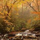Smoky Mountain color change by dc witmer