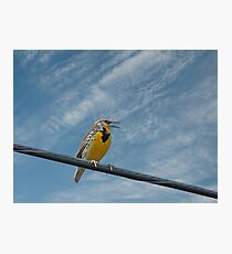 Western Meadowlark Photographic Print