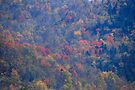 Green Mountains National Forest - Vermont by John Schneider