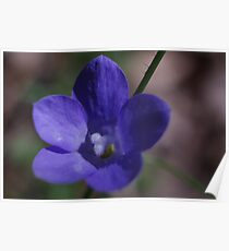 Tufted Bluebell Poster