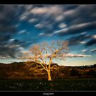 Morning Tree by JayDaley