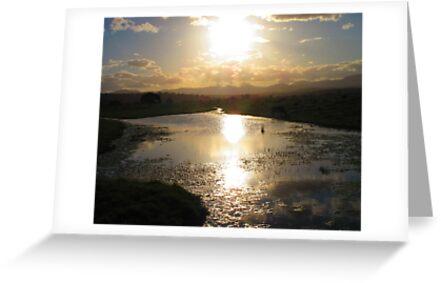 On Golden Pond by Michael John