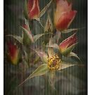 Rust 'n Roses No 7 ~ iPhone Case by Rosalie Dale