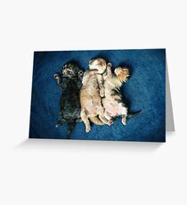 Just being this cute is completely exhausting! Greeting Card