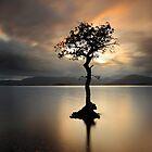 Lone tree on Loch Lomond by Grant Glendinning