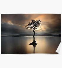 Lone tree on Loch Lomond Poster