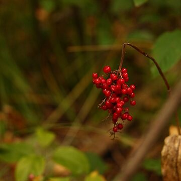 Wild Berries in Forest by ThomasMurphy