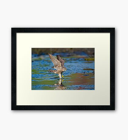 Hop, skip and a bath  Framed Print