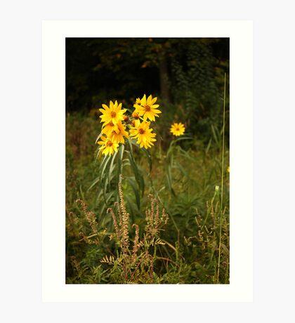 Wild Yellow Flower Art Print
