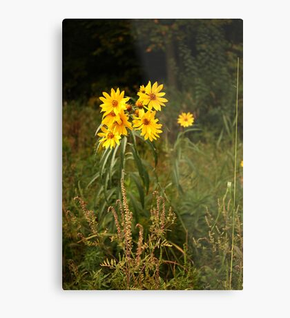Wild Yellow Flower Metal Print