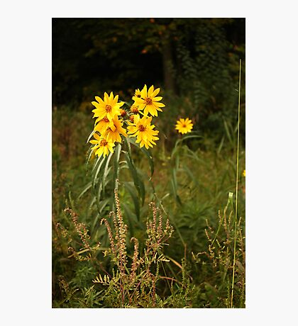 Wild Yellow Flower Photographic Print