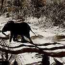 Elephant Crossing by skaranec1981