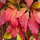 Autumn leafs by Ivo Velinov