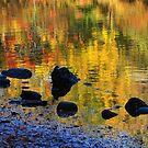 Autumns Rainbow by Karol Livote