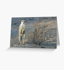The meerkat bush Greeting Card