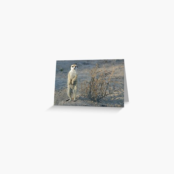 The meerkat bush Greeting Card