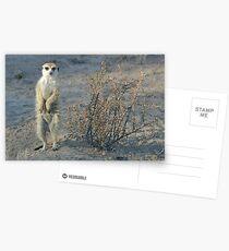 The meerkat bush Postcards