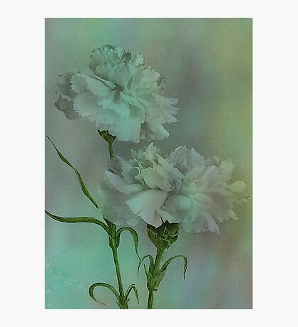 'Such Serviceable Flowers' Photographic Print