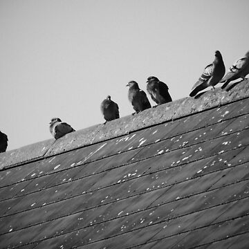 Pigeons on a Roof by Artberry