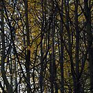 Trees, beautiful trees in autumn by Antanas
