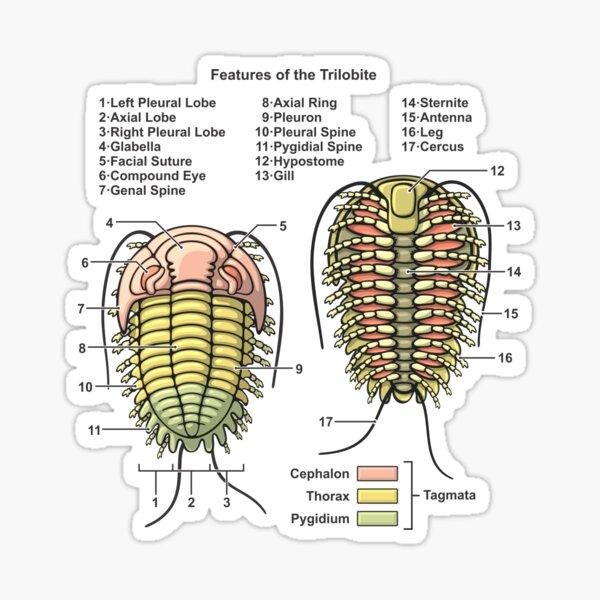 Trilobite Morphology Diagram Sticker