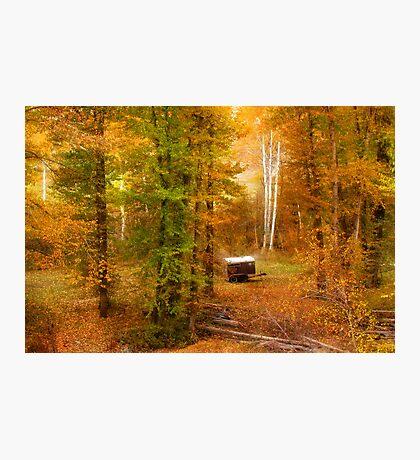 Memories of seasons past Photographic Print
