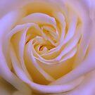 Unfurling Timeless Dreams by Lozzar Flowers & Art