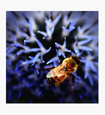 Buzz V Photographic Print