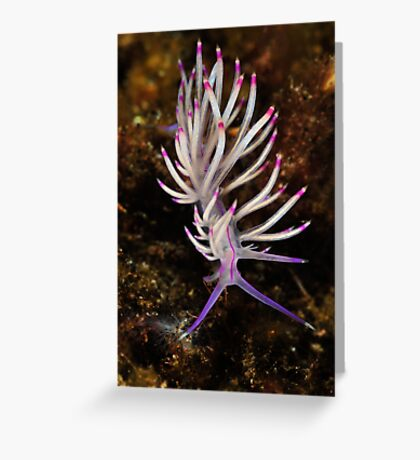 Red Lined Flabellina Greeting Card