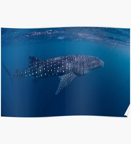 Giant from the Deep, Ningaloo, Western Australia Poster