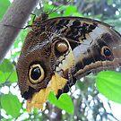 Butterfly 2 by Meladana