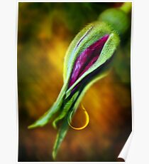Rose Bud Tear Poster