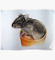 Dwarf Russian Hamster Poster